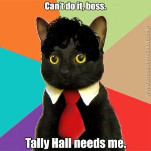 Business Cat Hawley